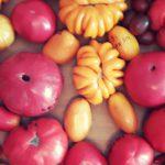 Продажа семян помидор 2018
