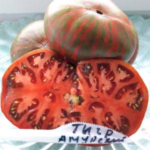 Amurskiy tigr помидор