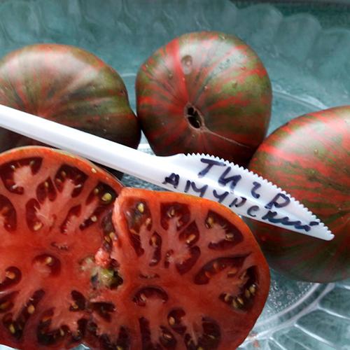 Amurskiy tigr помидоры