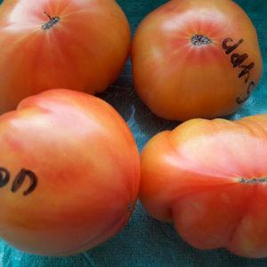 Бурракерские любимцы томаты