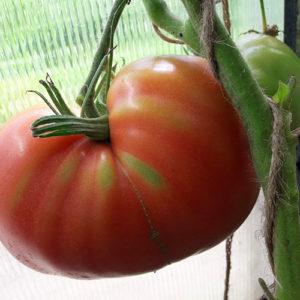 Freken Bok томаты