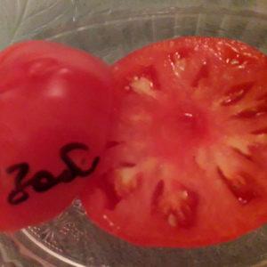 Izobil'nyye томат