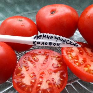 Leningradskiy kholodok томат