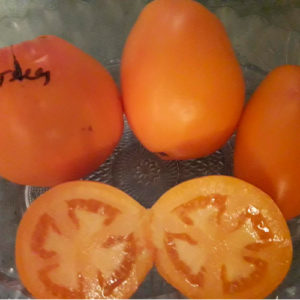 Puteets томат