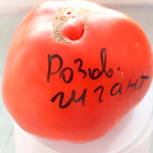 Rozovyy gigant помидор