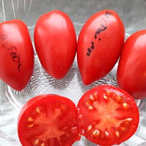 Sheboygan томат
