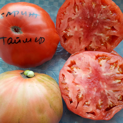 Sprint taymer томат