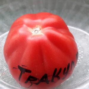 Trakula помидоры