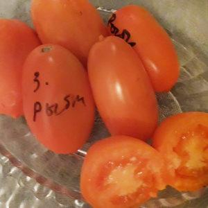 Zolotaya rybka томат