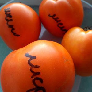 Lisenok томат