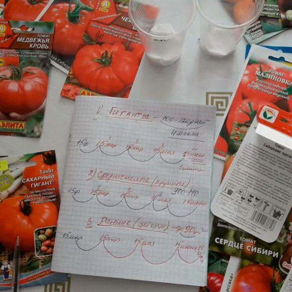 Когда сеять крупноплодные томаты?
