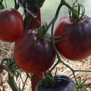 Tomat Serzhant Pepper