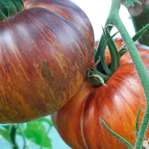 sort-tomata-mechta-alisy